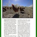 2017_09_expo_LeRegional_poule_1000px
